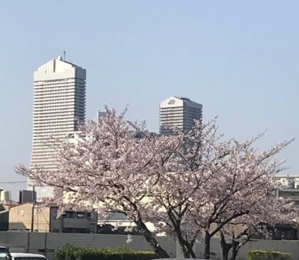 桜 アートホテル大阪ベイタワー